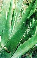 Remedio casero para desinflamar la piel