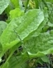 Remedio natural para curar el herpes facial