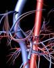 ¿Cómo funcionan las arterias?
