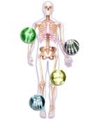 Enfermedad artrosis