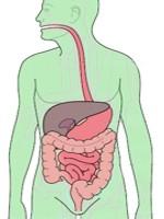 Qué es la digestión de los alimentos