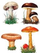 Beneficios de los hongos y setas