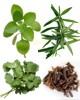 Especias yerbas aromáticas