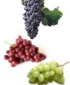 Las uvas y sus virtudes medicinales