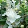 Como curar la rinitis de forma natural con hierbas medicinales