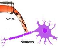 ¿Puede matar el alcohol las neuronas?