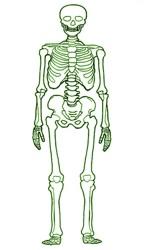 Cómo cuido mis huesos