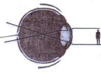 Cómo ve el ojo humano una imagen