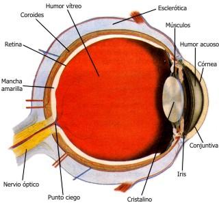 Las funciones del sentido de la vista