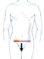 Consumir mucho cigarro es malo para la fertilidad