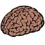 ¿A qué se refiere el término muerte cerebral?