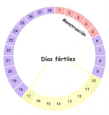 Días fértiles del ciclo menstrual de la mujer