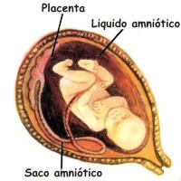 El proceso de la fecundación humana