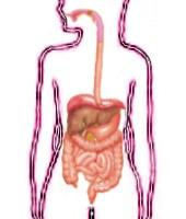 ¿Qué tiempo permanecen los alimentos en el estomago?