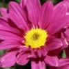 Qué significa polen de una flor