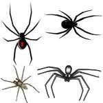 Que hacer frente a una picadura de araña
