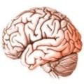 Como alimentar bien el cerebro