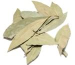 ¿Para qué sirve el laurel como planta medicinal?