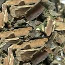 La cáscara sagrada sirve para el tratamiento de estreñimiento de manera natural
