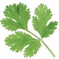 Usos curativos del cilantro en el cuerpo