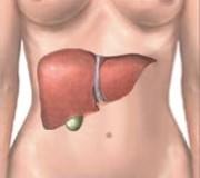6 funciones vitales del hígado del ser humano
