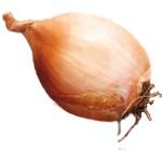 Propiedades y beneficios de la chalota (Allium ascalonium)