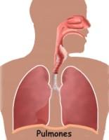 ¿En qué parte del cuerpo están situados los pulmones?