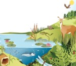 ¿Qué actividades ayudan a conservar los ecosistemas?
