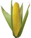 Lista de alimentos que se pueden hacer con el maíz