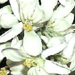Propiedades y beneficios de la planta llamada moringa