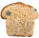 Comer pan con hongos ¿qué pasa?