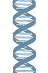 ¿Cómo podemos emplear el ADN para identificar a una persona?