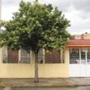 Porque son beneficiosos los árboles en la ciudad