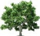 Razones que debemos considerar para cuidar los árboles