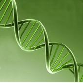 ¿A qué se refiere el genoma humano?