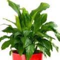 ¿Cuál es la importancia de las plantas en el mantenimiento de la vida?