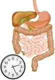¿En cuánto tiempo me hace digestión la comida?