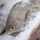 ¿Cuánto tiempo puede permanecer congelado el pescado?