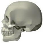 La dureza del cráneo humano