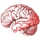 Porque razones el cerebro humano es muy complejo
