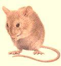 ¿Qué tipo de enfermedades son provenientes de las ratas?