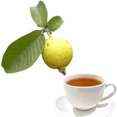 Beneficios del té de raíz de guayaba