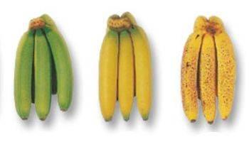 Tiempo de descomposición de los plátanos
