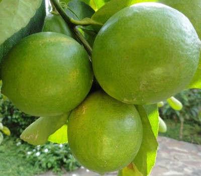 ¿Qué pasa si consumes mucho limón?