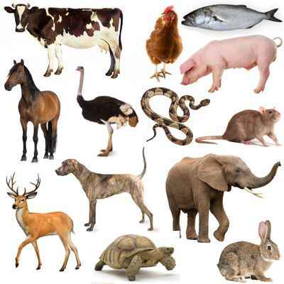 Animales comestibles