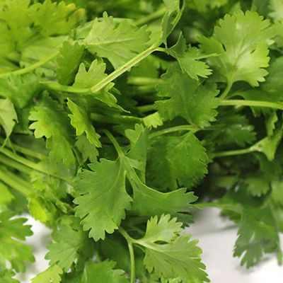 Efectos del cilantro en el organismo