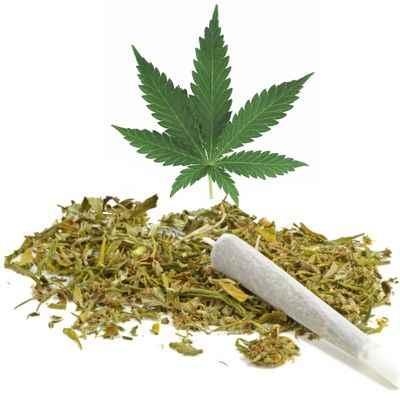 Porque se dice que la marihuana es mala si es natural