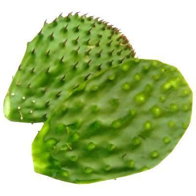Principales sustancias nutrimentales del nopal