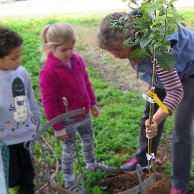 Beneficios de plantar un árbol frutal ¿Porque es bueno sembrar un árbol frutal?