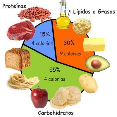 ¿Qué función tienen los carbohidratos proteínas y lípidos en nuestro organismo?